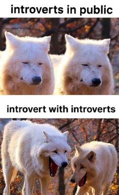 Really Funny Memes, Stupid Funny Memes, Funny Laugh, Funny Relatable Memes, Funniest Memes, Funny Stuff, 9gag Funny, Random Stuff, Funny Animal Jokes