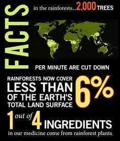 Rainforest Conservation Facts