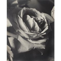 "yama-bato: "" By Man Ray THE ROSE """