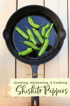 Shishito peppers are all the rage and for good reason. They are easy to grow and even easier to gobble up in a shishito three-course meal! Recipes With Banana Peppers, Stuffed Banana Peppers, Grow Your Own Food, How To Make Bread, Growing Vegetables, Rage, Food Inspiration, Course Meal, Delicious Desserts
