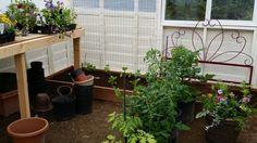 1st season greenhouse 1