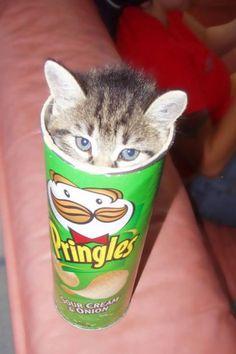 Ook deze kat heeft zich weer in een bijna onmogelijke houding weten te plaatsen. Het is van die droge humor in plaatjes waar ik van hou Bron: wut. I don't even like cats.. :3 #Cats