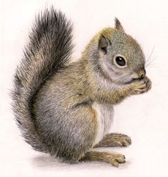 Marvelous Drawing Animals In The Zoo Ideas. Inconceivable Drawing Animals In The Zoo Ideas. Squirrel Tattoo, Squirrel Art, Cute Squirrel, Squirrels, Squirrel Illustration, Illustration Art, Illustrations, Animal Paintings, Animal Drawings