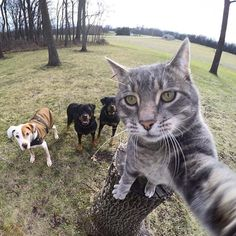 "3,343 Likes, 132 Comments - Hung Vanngo (@hungvanngo) on Instagram: ""Cats love to take #selfie too """