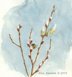 Pussy willows are already bursting forth on the Oregon Coast. I sketched this one on Feb. Drawing Sketches, Drawings, Sketching, Watercolor Kit, Pictures To Draw, Drawing Pictures, Nature Journal, Sister Love, Spring Is Coming