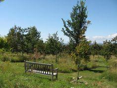 malupien   britské přírodní hřbitovy – rajce.net