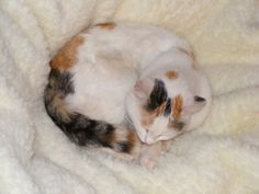Nice Cute Cats photos   Most Beautiful Pets