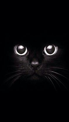 Black cat dibujo y pintura cat wallpaper, cat photography y cats. Tier Wallpaper, Cat Wallpaper, Tumblr Wallpaper, Animal Wallpaper, Wallpapers Tumblr, Mobile Wallpaper, Handy Wallpaper, Wallpaper Wallpapers, Screen Wallpaper