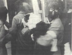 angry-hippo:  Sunday, July 7th 1985 - the Central Animal Liberation League (CALL) raids the Park Farm breeding center at Oxford, rescuing th...