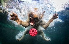 Dog. Ball. Dive!