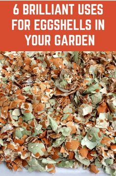 6 Brilliant Uses For Eggshells In Your Garden - - Don't throw your eggshells away! Here are six wonderful ways to use them in your garden. Growing Veggies, Growing Plants, Gardening For Beginners, Gardening Tips, Flower Gardening, Home Vegetable Garden, Garden Types, Edible Garden, Plant Care