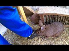Kaninchenstall professionell selber bauen, oder doch kaufen? Teil 1 - YouTube