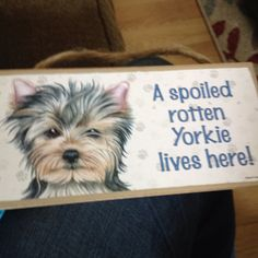 A spoiled rotten Yorkie lives here!  No one eats unless Jack eats, too.  No one goes in the car unless Jack goes, too.