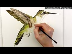 How to paint realistic hummingbird feathers in watercolor by Anna Mason - YouTube