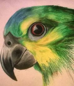 Art Painting, Disney Art Drawings, Nature Art Painting, Pastel Drawing, Oil Pastel Drawings, Parrot Drawing, Amazing Art Painting, Oil Pastel Art, Color Pencil Art