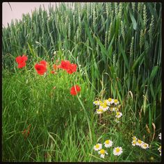 Flowerpower Nature, Plants, Naturaleza, Plant, Nature Illustration, Off Grid, Planets, Natural