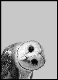 Owl Peekaboo Affiche dans le groupe Affiches / Formats / chez Desenio AB (2573)