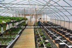 aquaponic tomatoes - diy outdoor aquarium.backyard fish tank 8908887305 #hydroponicstomatoes