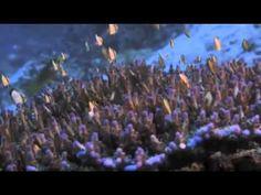 Ocean Conservancy PSA