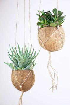 40 Hanging Plant Ideas 31