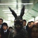 Evil Bunny, Indie Films, Bunny Suit, Rabbits, Bunnies, Rabbit, Bunny