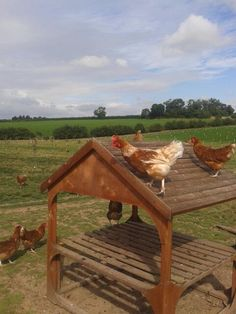 Some of our farmer Patrick's girls enjoying the view from the roof!   http://thehappyegg.co.uk