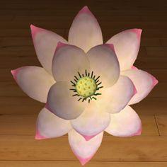 Lotos biało-różowy 3D www.florysta3d.pl