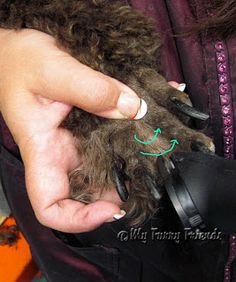 Pet Grooming: The Good, The Bad, & The Furry: Shaving Poodle Feet