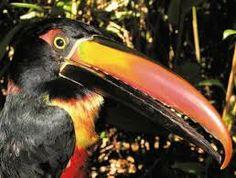 fauna del bosque tropical - Buscar con Google