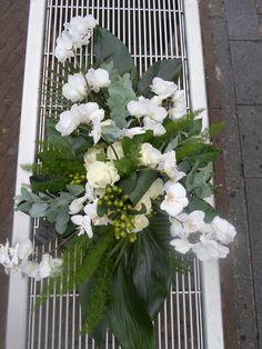 phalenopsis white