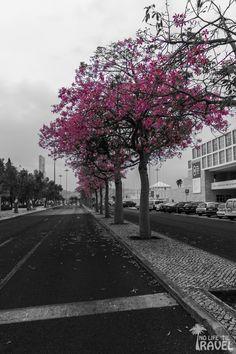 Lizbona Sidewalk, Side Walkway, Walkway, Walkways, Pavement