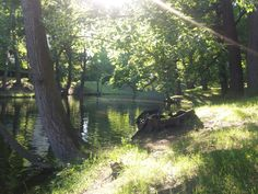 In the park. Saratov. Russia