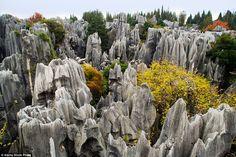 El bosque de piedra o Shilin se creó de formaciones de piedra caliza escarpadas en el Condado Autónoma Yi de Shilin, provincia de Yunnan que cuentan con plantas de colores.