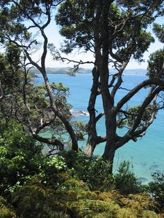At Tutukaka Coast I started to realize that portrait format is better for Pinterest