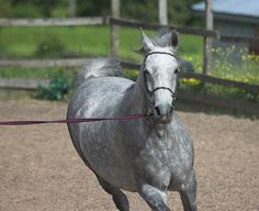 Horse-training-pictures-9.jpg
