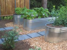 Love these veggie beds in water troughs.