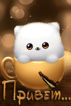 Анимация Белый котенок сидит в чашке и моргает глазками. На слове Привет бабочка…