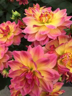 Flower season:)
