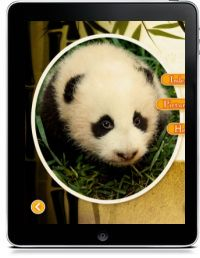 Baby Panda's new home Zentro Media PreK-5 nonfiction; pandas; zoos