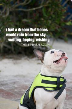 i had a dream that bones would rain from the sky #thenewbarker #dogevents #2016dogevents
