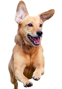 Animal Medical Clinic - 1405 N. Milpitas Blvd. Milpitas, CA 95035 408-262-7190