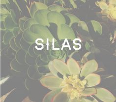 """I really like Silas. It's cute, not very common and it means, """"wood, forest""""."""