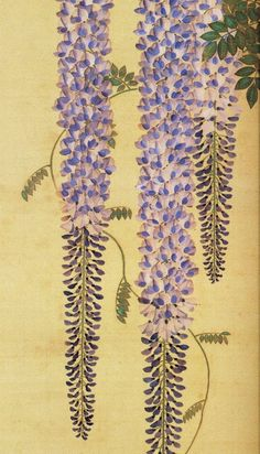by Kiitsu Suzuki  鈴木其一 (1796 - 1858 ) , Japan  part of a creeper 9focus only on a couple of blooms)