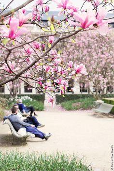 Spring in Jardin du Palais Royal