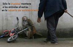 No a los zoológicos no a los circos con animales...  Amo y respeto a los animales! ❤