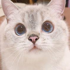 Cute Baby Cats, Cute Little Animals, Kittens Cutest, Animals And Pets, Baby Animals, Cute Cat Memes, Cute Cat Wallpaper, Cat Aesthetic, Kawaii Cat