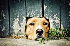 There are many methods to find a lost dog, be sure you know them all! http://www.cesarsway.com/training/leadership/What-to-Do-if-Your-Dog-Goes-Missing