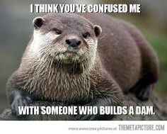 Image result for Cute otters