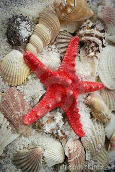 Estrella con conchitas de mar