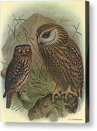 Morepork and Laughing Owl Canvas Print by J G Keulemans Zealand Tattoo, Owl Canvas, Fine Art Prints, Canvas Prints, Free Printable Art, Free Printables, Bird Illustration, Owl Art, Cute Owl